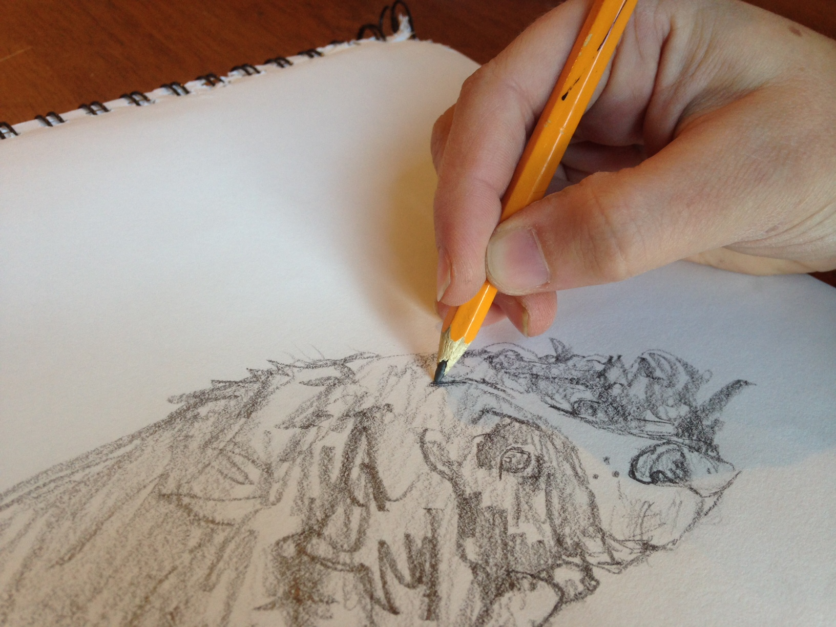 Beginning Drawing: Learning to See
